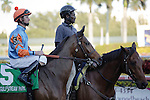 Heavenly Landing on post parade before winning the Marshua's River(G3) at Gulfstream Park. Hallandale Beach, Florida. 01-07-2012