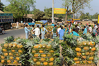 BANGLADESH, Region Madhupur, village local market, rickshaw with pineapple