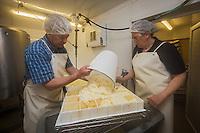 France, Calvados (14), Pays d' Auge, Saint-Philbert-des-Champs,  Fabrication du Pont-l'évêque AOP , chez Françoise et Jerôme Spruytte , le moulage du caillé // France, Calvados, Pays d' Auge, Saint Philbert des Champs, Pont l'Évêque cheese making , Françoise et Jerôme Spruytte, Pont l'Évêque cheese producers,  moulding the curd, [Autorisation : 2014-119]