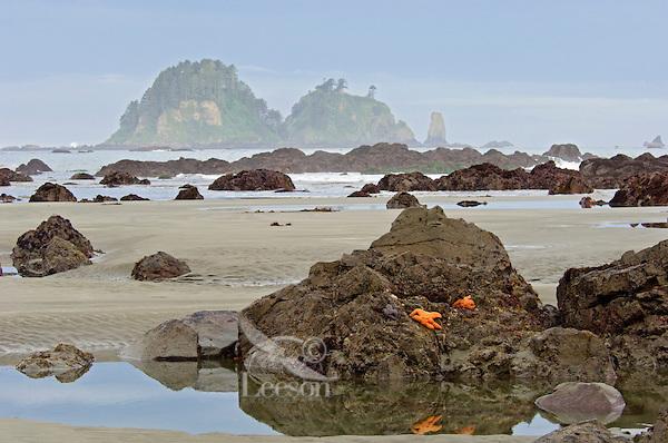Olympic National Park coastal scene near Cape Alava during low tide.