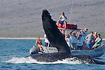 Humpback Whale Archive Low Res