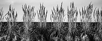 COMMERCE CITY, CO - OCTOBER 25: Grass blows in the wind on the side of the field at Dick's Sporting Goods training fields on October 25, 2020 in Commerce City, Colorado.
