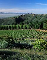 SMITH & HOOK/HAHN ESTATES Vineyard has a spectacular view across the SALINAS VALLEY to the GABILAN MNTS. - CALIF.