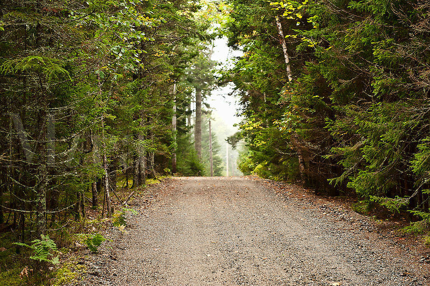 Unpaved road through evergreen forest, Maine, USA