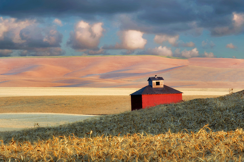 Wheat field ready for harvest and barn. The Palouse. Washington