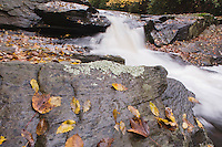 Fall leaves on rock and stream, Raven Rock State Park, Lillington, North Carolina, USA