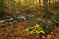 Autumn forest along Lynn Camp Prong, Tremont