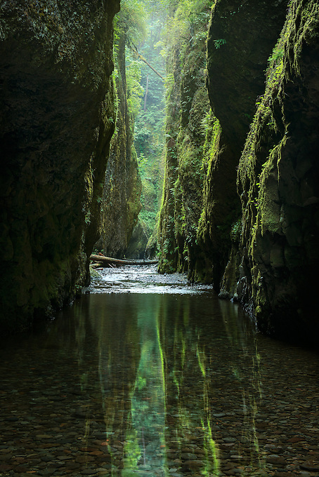 A unique rainforest slot canyon reflected in soft morning light, Oregon.