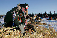 Tuesday March 6, 2007   Volunteer veterinarian George Stroberg checks examines rookie Sigrid Ekran's lead dogs at the Nikolai checkpoint on Tuesday