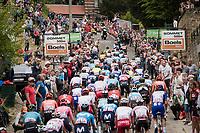 peloton up the infamous Mur de Huy<br /> <br /> 83rd La Flèche Wallonne 2019 (1.UWT)<br /> One day race from Ans to Mur de Huy (BEL/195km)<br /> <br /> ©kramon
