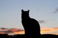 BOGOTA -COLOMBIA- 16-08-2013. Gato    /  Cat<br />  . Photo: VizzorImage /Felipe Caicedo  / STAFF