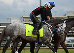 LOUISVILLE, KY - MAY 04: Creator (Tapit x Morena, by Privately Held) is led onto the track by his trainer Steven M. Asmussen and ridden by Abel Flores at Churchill Downs, Louisville, KY, in preparation for the Kentucky Derby. Owner WinStar Farm LLC. (Photo by Mary M. Meek/Eclipse Sportswire/Getty Images)