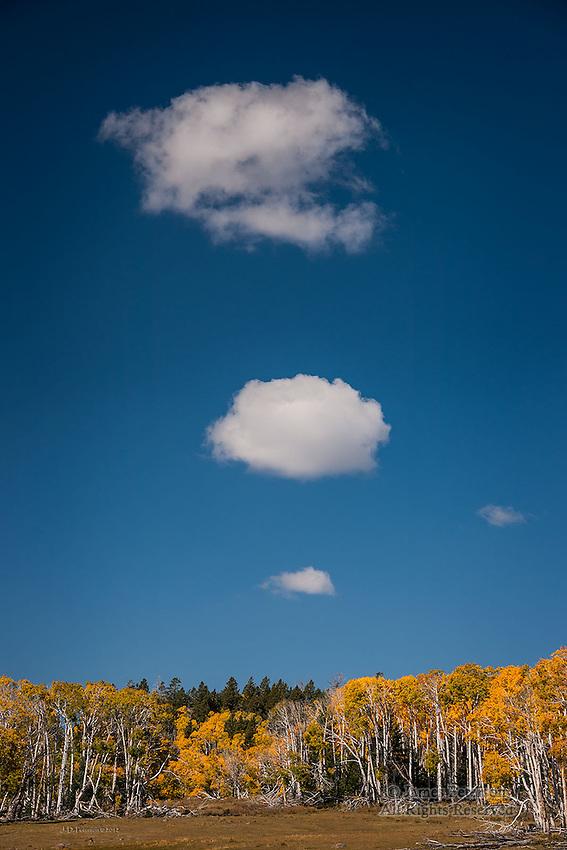 Mother Nature's Smoke Signals, Boulder Mountain, Utah
