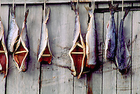Salmon out to to dry in the Russian village of Inchoun. Inchoun Siberia, Russian Far East Russia Village on the shore of the Arctic Ocean, Siberia, Russia.