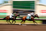 Two Thoroughbreds crossing the finish line at the Del Mar Racetrack in Del Mar, California, are a blur of speed.