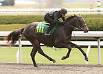 07 April 2011.  Hip #111 GOLDEN TICKET  Speightstown - Business Plan colt, consigned by Niall Brennan.