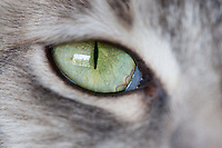 Yes, closeup pictures of cat eyes are a cliche, but how can I resist taking a picture of Lucca's green eyes with my new macro lens?