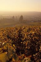 Europe/France/Champagne-Ardenne/51/Marne/Oger: Aube sur le village et le vignoble champenois