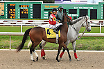 January 16, 2016: Lovable Lyss with Francisco C Torres up in the Silverbulletday Stakes race in New Orleans Louisiana. Steve Dalmado/ESW/CSM