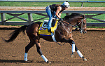 October 26, 2014:  Footbridge, trained by Eoin Harty, exercises in preparation for the Breeders' Cup Classic at Santa Anita Race Course in Arcadia, California on October 26, 2014. Scott Serio/ESW/CSM