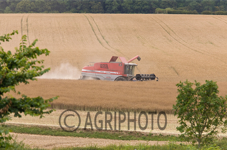 Massey Ferguson combine harvesting oil seed rape.Picture Tim Scrivener date taken 25th July  2011 .mobile 07850 303986 e-mail tim@agriphoto.com.....covering Agriculture in The United Kingdom.....