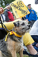 Grand Depart - Tour de France 2014<br /> Yorkshire England.<br /> Leaders go through famous town of Ilkley with Moors in distance. Nelly dog<br /> <br /> Dog fan  - Nellie  - Border Terrier<br /> Pic by Gavin Rodgers/Pixel 8000 Ltd COPYRIGHT WARNING : THIS IMAGE IS RIGHTS MANAGED AND THE COPYRIGHT MAY SIT WITH A THIRD PARTY PLEASE CONTACT simon@swpix.com BEFORE DOWNLOAD AND OR USE Cycling fans spectators