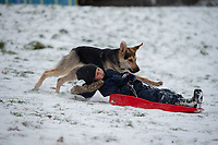 A young girls dog runs alongside while sledging in the park in Sidcup following Heavy Snowfall at Sidcup, Kent, England on the 8 February 2021. Photo by Alan Stanford.