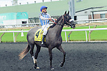 Don't Leave Me(4) with Jockey Eurico Rosa Da Silva aboard after the Natalma Stakes at Woodbine Race Course in Toronto, Canada on September 13, 2014 with Jockey Patrick Husbands aboard.