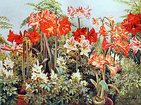 RJRKH7 Amaryllis' Illustration by Beatrice Emma Parsons (1870-1955); British painter and is best known for her watercolours of garden subjects