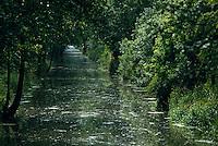 Europe/France/Poitou-Charentes/79/Deux-Sèvres/Arcais: Marais poitevin