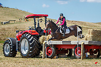NZL-Ashleigh McKinstry rides Pioneer Brass Monkey. Dunstan Horse Feeds CCI3*-S. 2021 NZL-RANDLAB Matamata Horse Trial. Sunday 21 February. Copyright Photo: Libby Law Photography.
