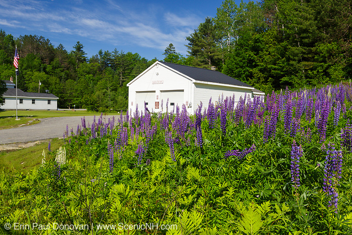 Fields of Lupine Festival in the small town of Easton, New Hampshire USA during the spring months.