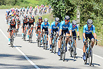 The peloton led by Movistar Team and Bahrain Victorious during Stage 20 of La Vuelta d'Espana 2021, running 202.2km from Sanxenxo to Mos, Spain. 4th September 2021.    <br /> Picture: Cxcling | Cyclefile<br /> <br /> All photos usage must carry mandatory copyright credit (© Cyclefile | Cxcling)