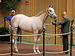 LEXINGTON, KY - September 12: Hip # 8 Tapit - Scarlet Tango colt consigned by Denali Stud sold for $400,000 at the September Yearling sale at Keeneland.  September 12, 2016 in Lexington, KY (Photo by Candice Chavez/Eclipse Sportswire/Getty Images)