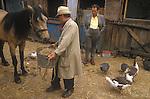 Johnny Pinto's Horse yard, Hackney 1980s London Totters rag and bone man.