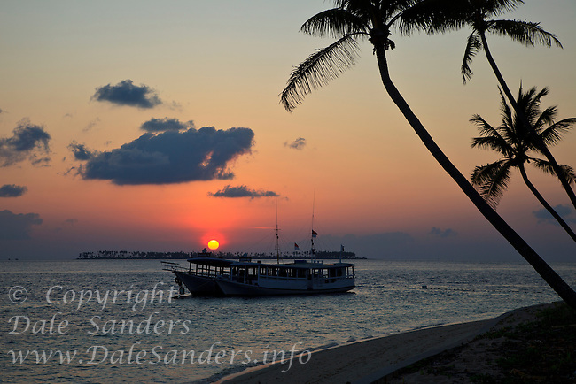 Sunset over Coconut Palm Trees and an offshore island from Wakatobi Dive Resort, Southeast Sulawesi, Indonesia.