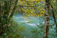 autumn leaves on trees near river, Landscape in Fragas do Eume nature park, Coruña, Galicia, Spain.