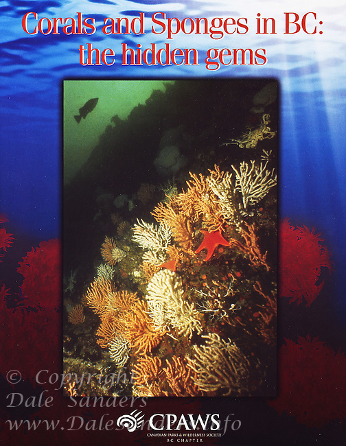 """Cover of """"Corals and Sponges in BC"""" a special report by Canadian Parks and Wilderness Society."""
