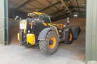13-8-2021 Tele-handler moving  feed wheat <br /> ©Tim Scrivener Photographer 07850 303986<br />      ....Covering Agriculture In The UK....