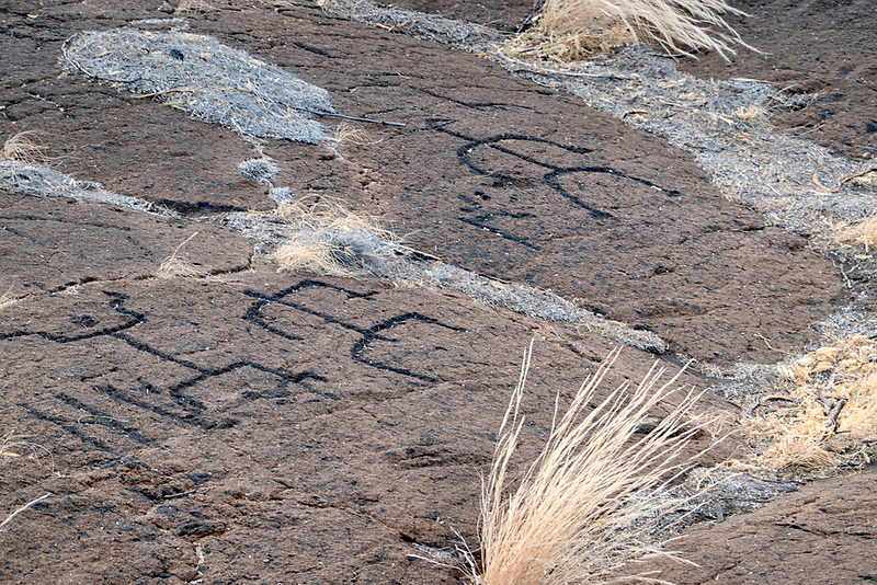 Petroglyphs at Puako Petroglyph Archacological District. Malama Trail, Hawaii, the3 big island