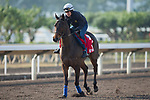 SHA TIN,HONG KONG-DECEMBER 08 : Garlingari,trained by Corine Barande-Barbe,exercises in preparation for the Hong Kong  at Sha Tin Racecourse on December 8,2017 in Sha Tin,New Territories,Hong Kong (Photo by Kaz Ishida/Eclipse Sportswire/Getty Images)