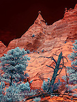 The Pinnacle (Infrared) ©. 2016 James D Peterson.  The otherworldly volcanic formations of New Mexico's Kasha-Katuwe Tent Rocks National Monument are enlivened by the exotic hues of a color infrared image.<br /> <br /> Limited Edition - Call Jim at 928-554-4340 for current availability.<br /> <br /> This image was nominated as a Finalist in the International Color Awards competition.