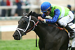 1 May 2010: Phola and Ramon Dominguez win the Churchill Distaff Turf Mile Stakes at Churchill Downs, Louisville, KY.