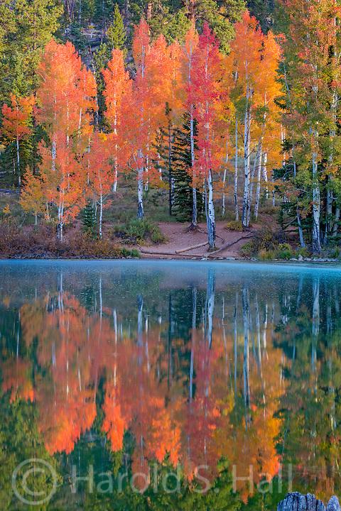 Aspen Mirror Lake near Duck Creek Village shows just how it got its name.