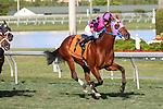 January 16, 2016: #7 Amelia's Wild Ride (FL) with jockey Jose A Lezcano on board wins the Sunshine Millions Turf Sprint at Gulfstream Park in Hallandale Beach, FL.  Liz Lamont/ESW/CSM