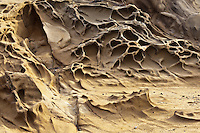 Pockets of tafoni in sandstone at Bean Hollow State Beach on the California coast.