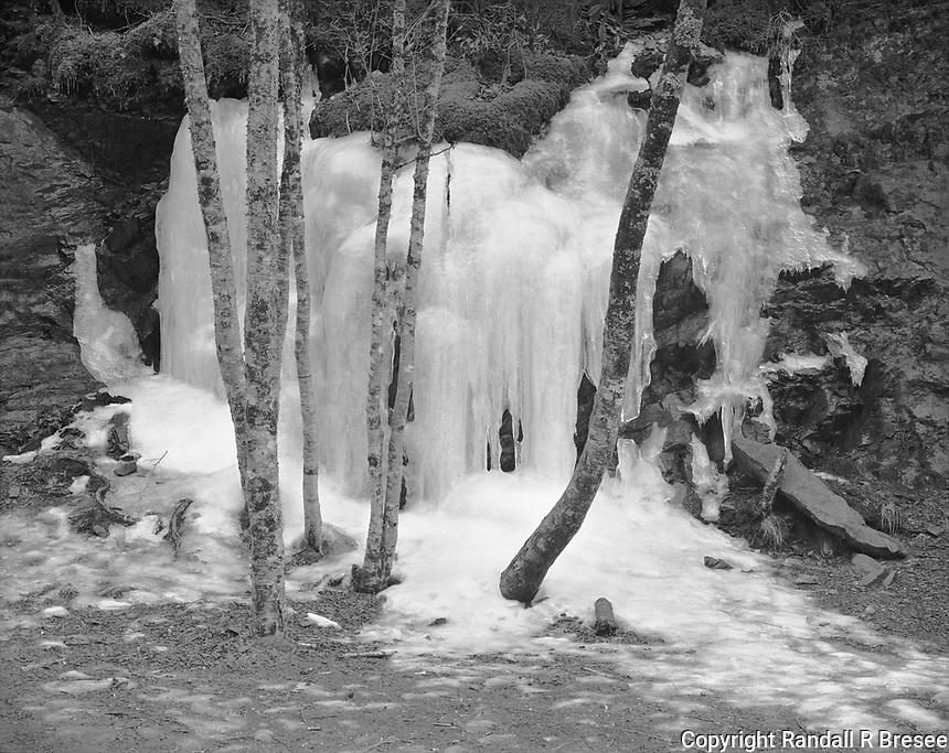 """""""Ice and Trees Near Newfound Gap""""<br /> Great Smoky Mountains National Park, Tennessee<br /> <br /> This photograph was recorded in January at a higher elevation in the Great Smoky Mountains NP. The photo shows typical winter ice formed near Newfound Gap on Highway 441."""