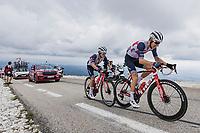 Bauke Mollema (NED/Trek-Segafredo) and  Kenny Elissonde (FRA/Trek-Segafredo) on the Mont Ventoux <br /> <br /> Stage 11 from Sorgues to Malaucène (198.9km)<br /> 108th Tour de France 2021 (2.UWT)<br /> <br /> ©kramon