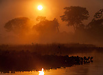 Misty sunrise in a lagoon off the Paraguay River. Taiama Ecological Reserve, western Pantanal, Brazil. September.