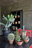 Cacti plants in terracotta pots are arranged on a metal table in a stone outdoor building.